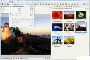 FastStone Image Viewer-3